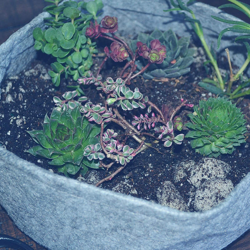 PLANTING SUCCULENTS IS MY NEW ZEN 1
