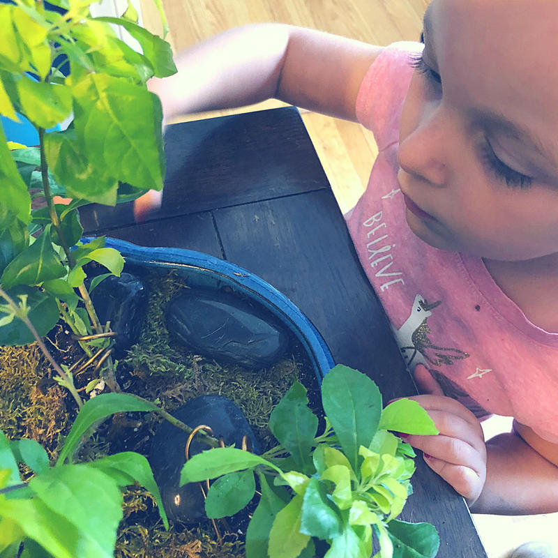 Sponsor Spotlight My Garden Box and their amazing Bonzai gardening kit