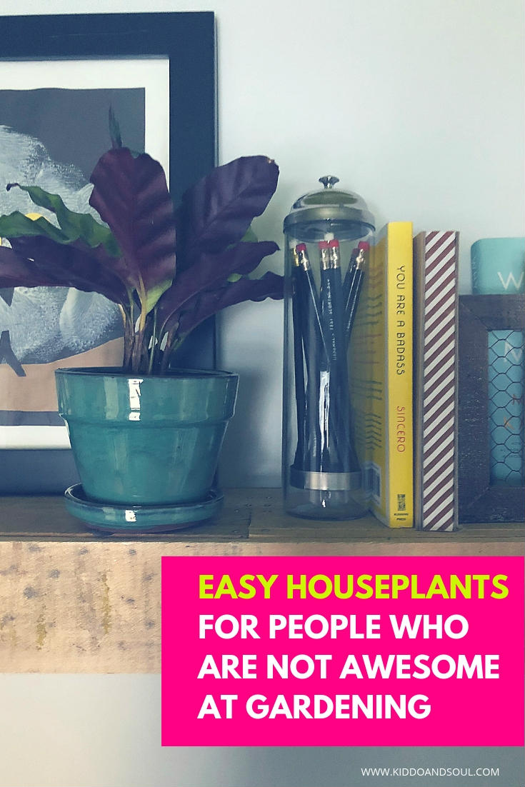 If you want green stuff in your house but are terrible at raising houseplants, these plants are a great solution (black thumb and all).  #sponsored #plants #houseplants #home #gardening #greenthumb #mygardenbox #subscriptionbox #gardeners #plantlife #succulents #bonzai #plant #planting #subscription #gift #giftidea
