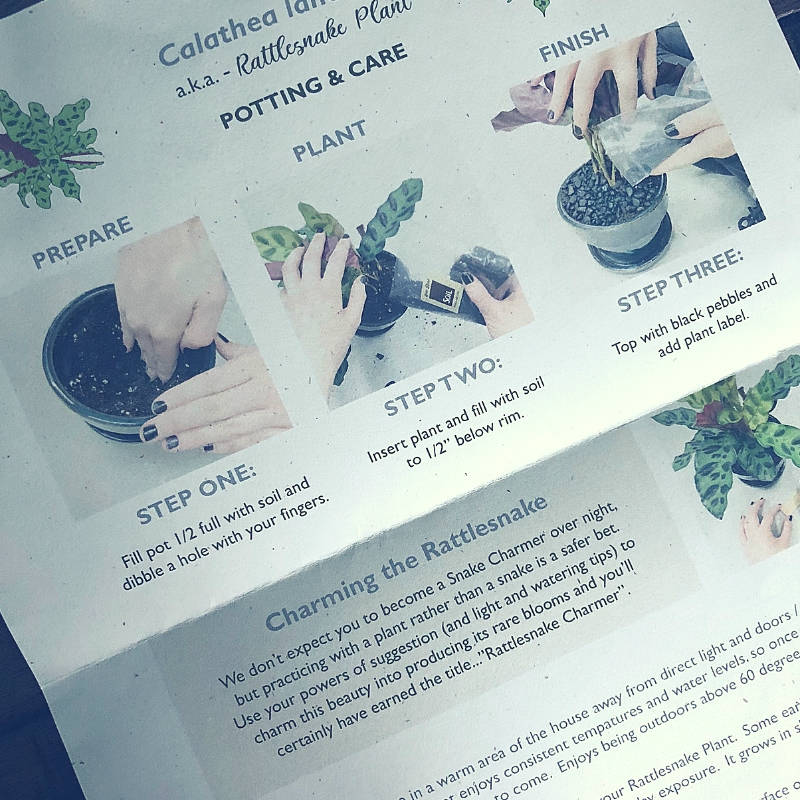 Easy houseplants for people who are not awesome at gardening