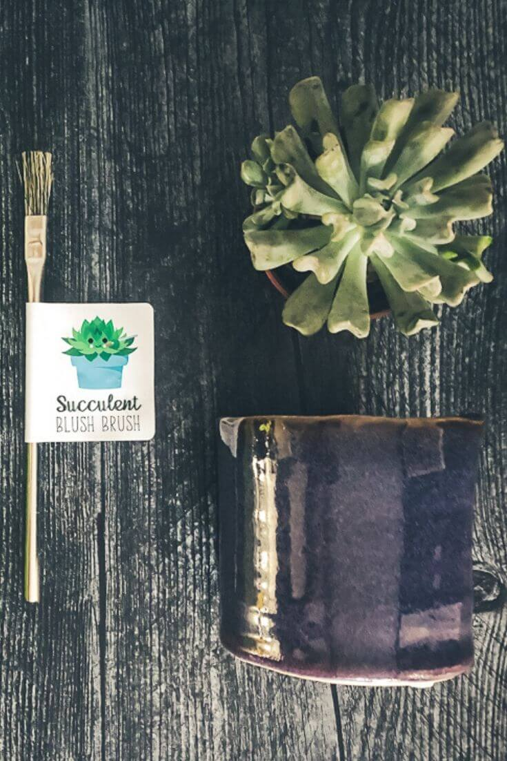 November Giveaway - Succulents Monthly